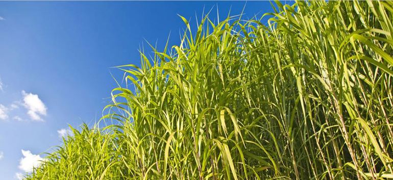 Biopower Market on the Rise