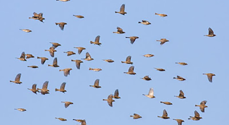 Birds Migrate Early Sparta Capital