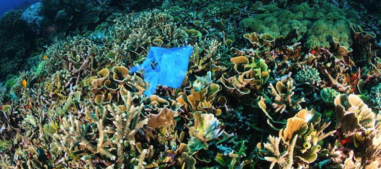 Corals Love Plastics