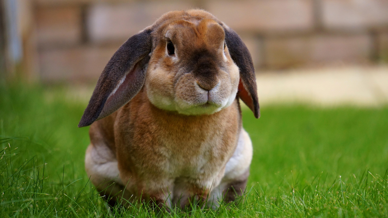 Rabbit Dropping Help Create Fuel