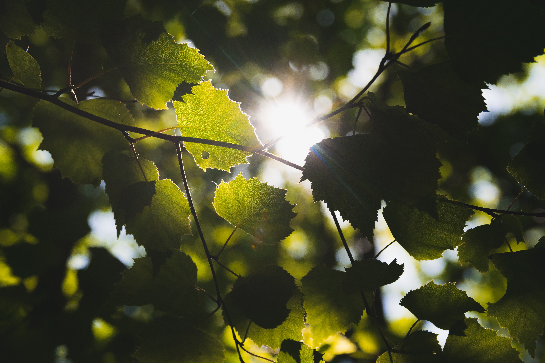Turning Sunlight into Fuel