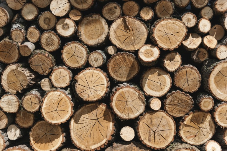Sawmill Residue Could Become Biodiesel