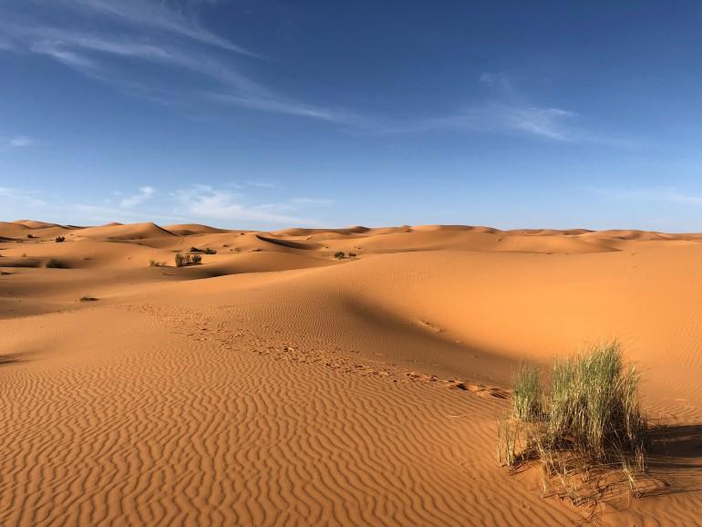 Wind Solar May Turn Desert Green