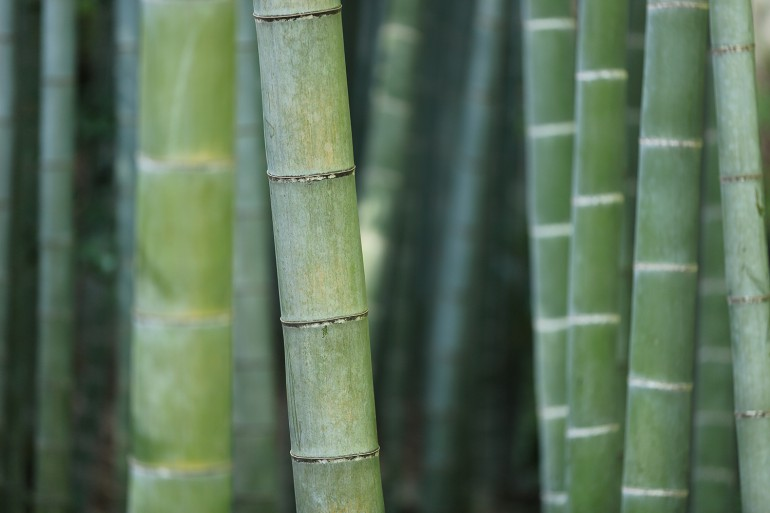 Bamboo - Is It Sustainable